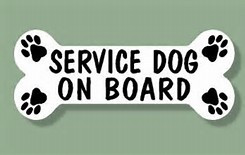 The making of  a service dog, from scratch, using all natural ingredients