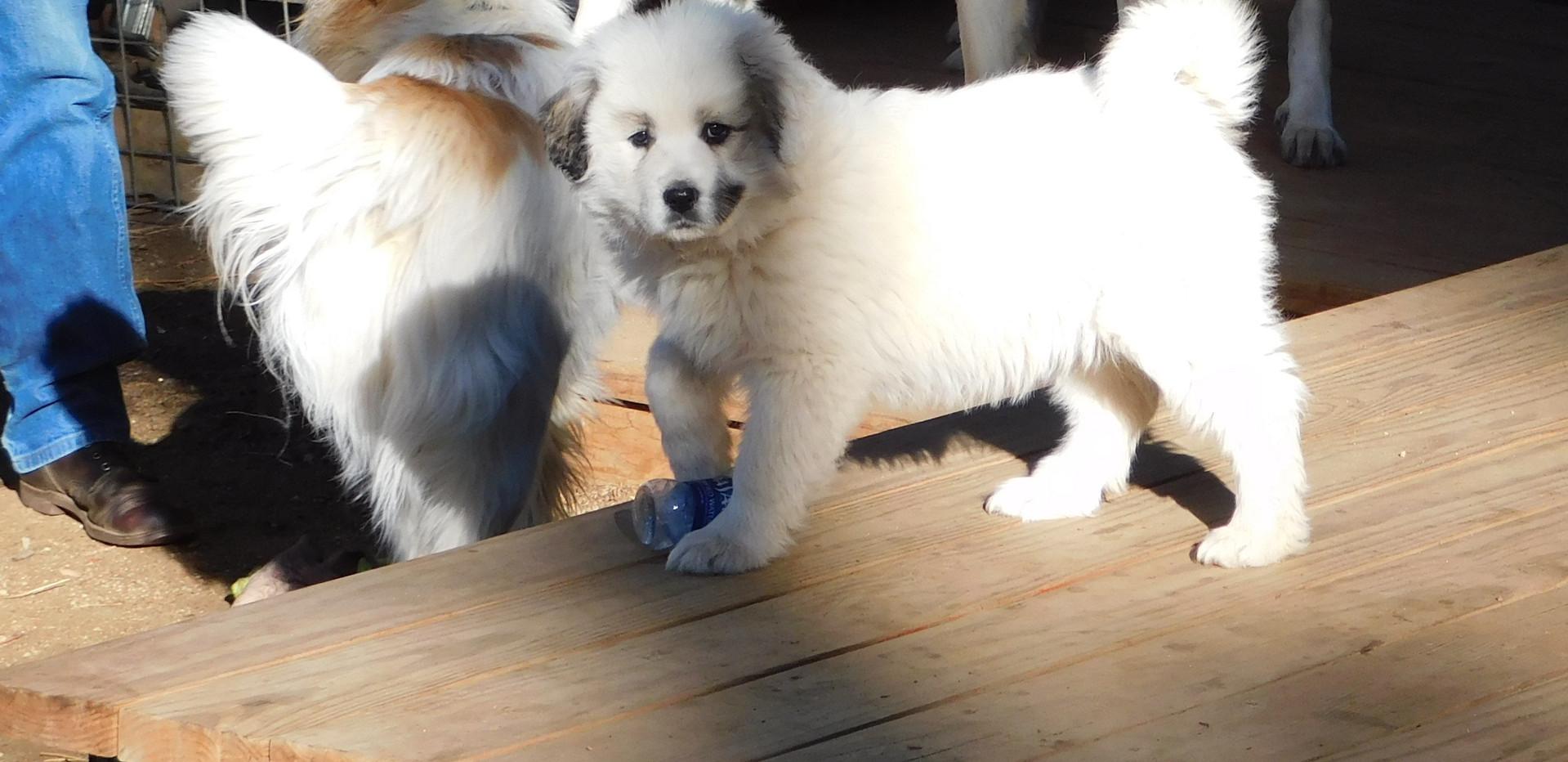 Rocky Mountain Companion Dogs