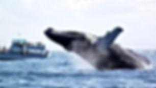 vaalad Guatemalas, Vaikne Ookean