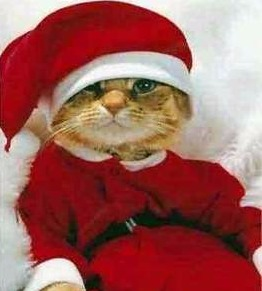 Bazil trying out the Santa suit....