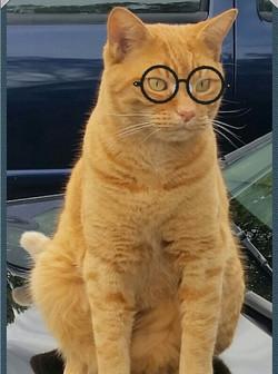 Bazil the Abbey cat.