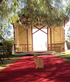 Bazil the Abbey cat waiting for the Bride