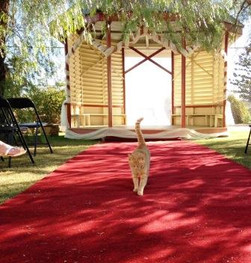 Bazil the Abbey cat doing last minute check before the Bride arrives