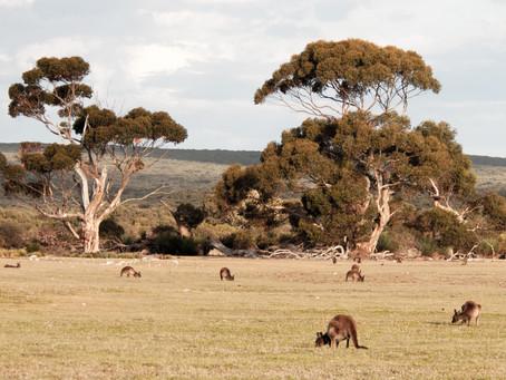 4 Unexpected Australian Cities