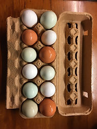 Eggs in Carton PRODUCTS Main Page Top Ro