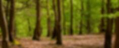 beechwood.jpg
