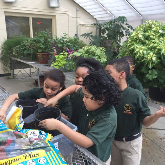 AFRICAN COLLEGE PREPARATORY ACADEMY STARTING SEED PLANTS