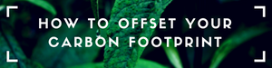 how to offset your carbon footprint