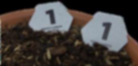 Token in soil.png