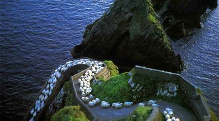 Roads and Sheep