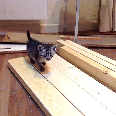 迷子の子猫。「斉藤」と命名。