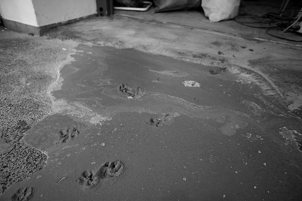 ギャー、猫の足跡!斉藤か!?