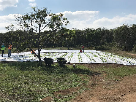 2021.02.05 - planting com field.jpg