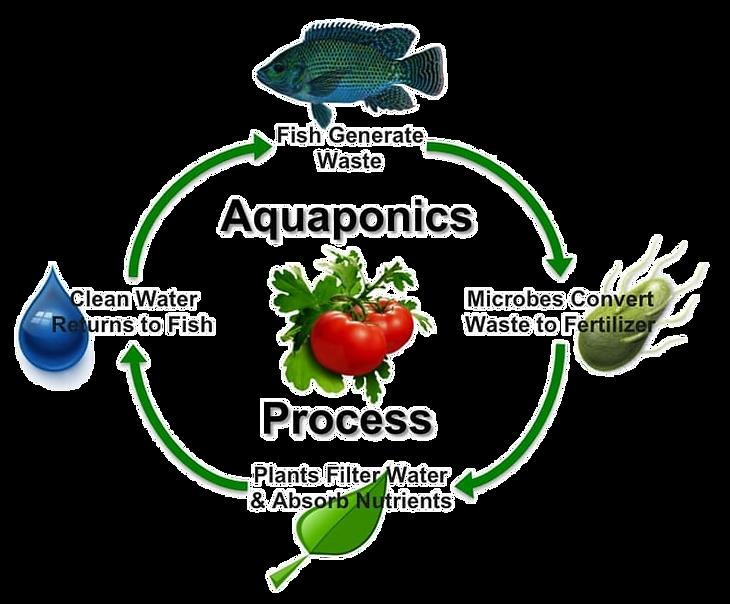 aquaponics-nitrogen-cycle_edited.png