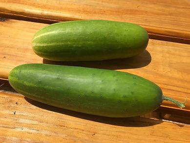 2021.06.21 - cucumber harvest.jpg