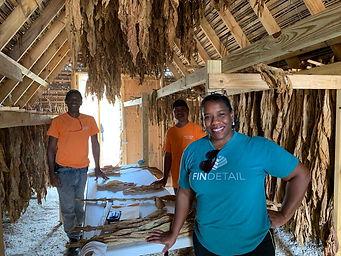 2020.05.20 - Preparing dried tobacco for