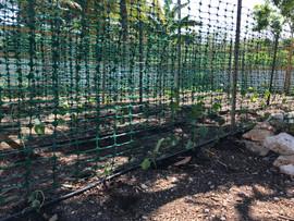 2021.05.10 - cucumbers planted.jpg