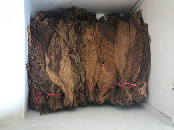 2021.06.25 - Fermenting Tobacco.png