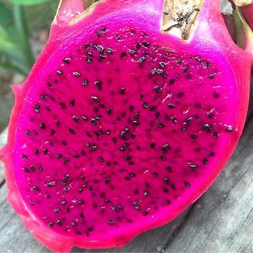 BOH - red dragon fruit.jpg