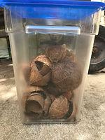 Coconut shells.jpg