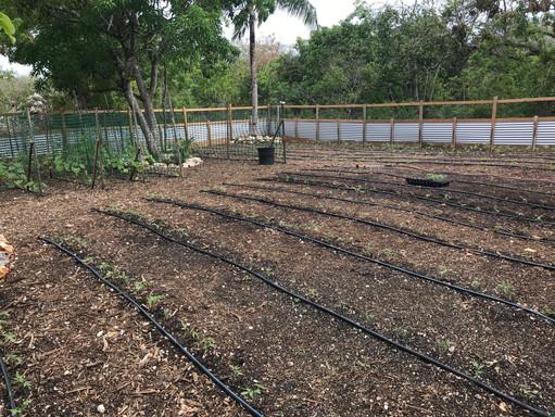 3021.05.24 - veg garden.jpg