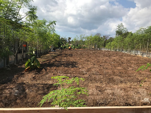 2021.03.22 - preparing research garden.j