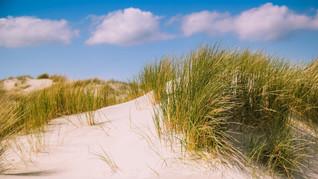 Hollands duinenlandschap