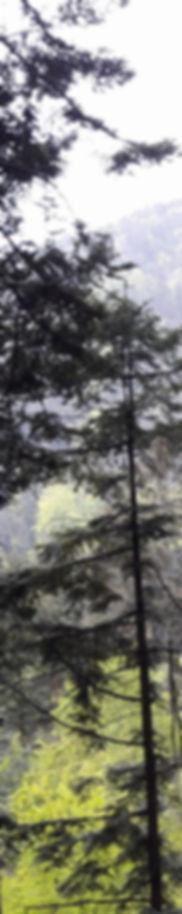 lateral_gauche_1a.jpg