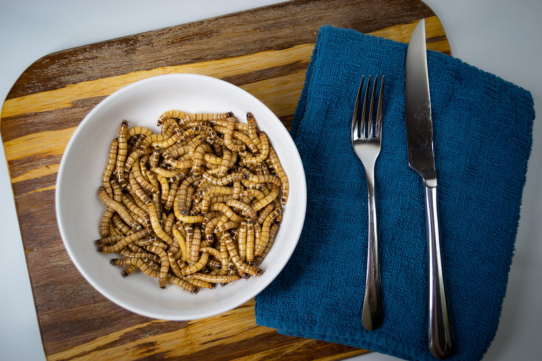 superworms, giant mealworms