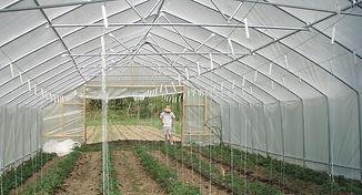 greenhouse-425782_1920_edited.jpg