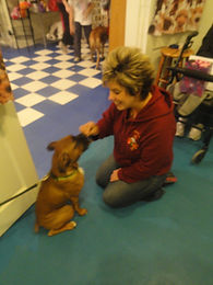 Visiting Puppies from Skyview Boxers