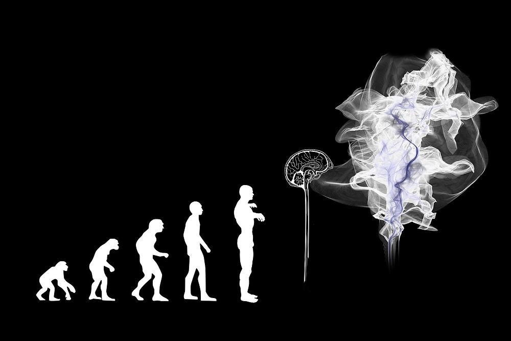 Das Bild zeigt die Evolution des Menschen vom Affen, hin zu dem heutigen, modernen Menschen. Die Aussage ist, dass der Mensch in seiner Entwicklung nur weiter wachsen kann, wenn er sich seiner selbst bewusst wird und dem Körper wieder alle essentiellen Vitalstoffen zu Verfügung stellt.