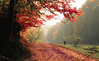daylight-fall-fog-589841_edited.jpg