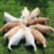 Lucy3 pups _ 4wks.jpg