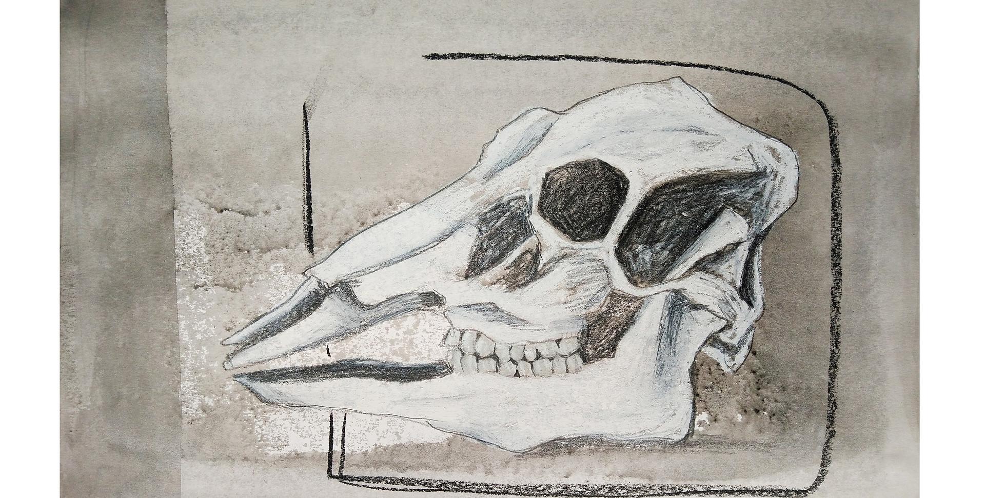 Dust and bones.jpg