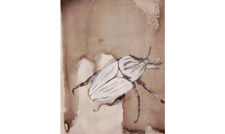 Dung beetle.jpg