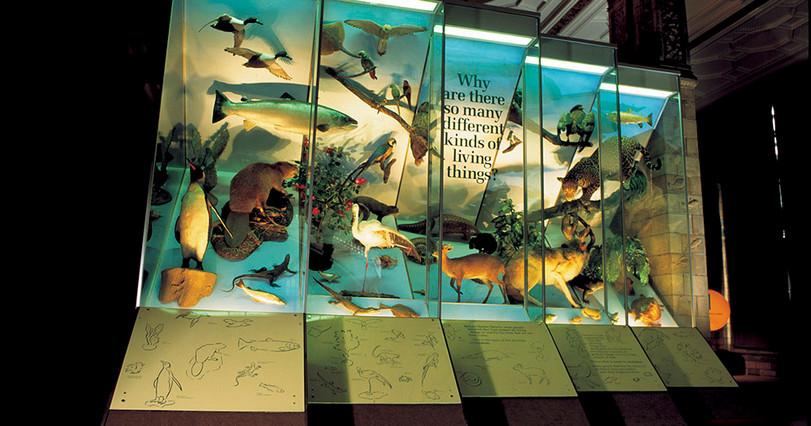 Museum large format print NHM.jpg