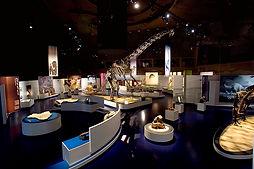 museum graphics.jpg