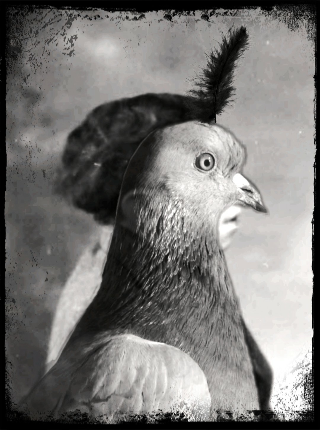 homme pigeon