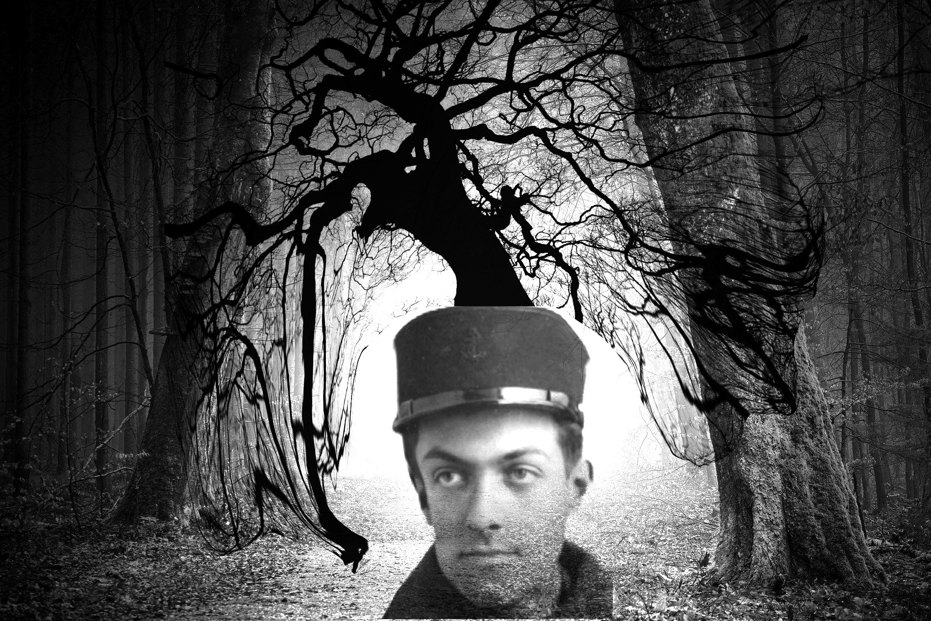 Des arbres dans la tête