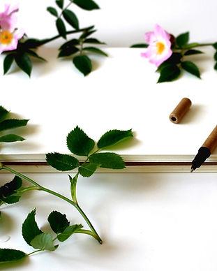 notebook-3397135_1920.jpg