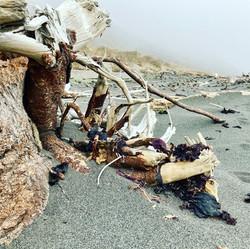 Lost Coast Driftwood, California