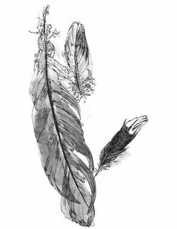 featherspdf (1).jpg