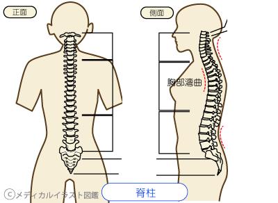 正しい姿勢の定義って、何だろう?