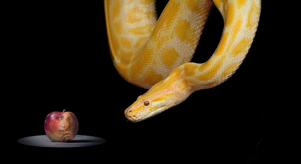 snake-1322240