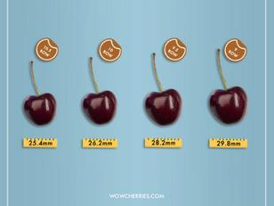 「櫻桃Row數越大尺寸越小?30秒教你看懂櫻桃尺寸!」