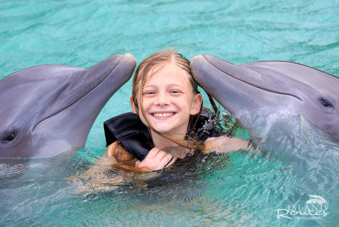 Dolphin Swim.jpg