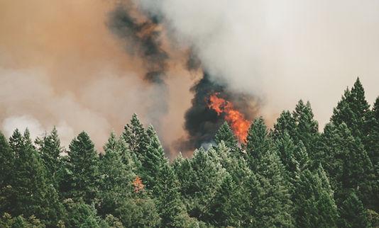 Incêndios Florestais Selvagens