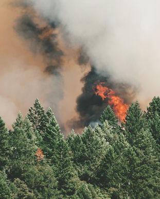 Wilde Waldbrände