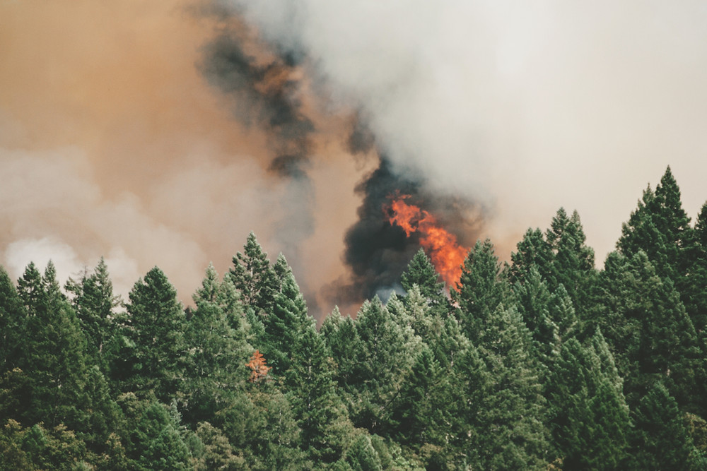 Wild Forest Fires are caused by climate change